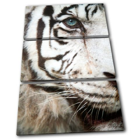 Tiger wildlife Animals - 13-1582(00B)-TR32-PO